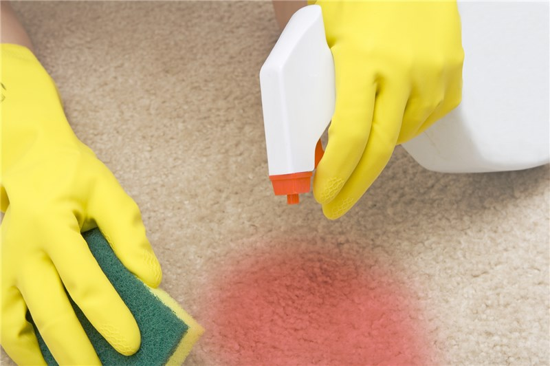 Fresh & Clean Carpet Cleaning