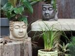 """ Buddha Planter"" To-Go Kit- at Color Me Mine - Aspen"
