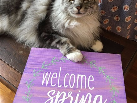 Family Board Art - Welcome Spring - 03.30.17 - Morning Session