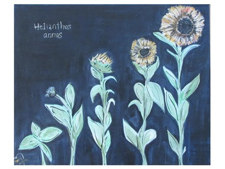 Growth-Sunflowers