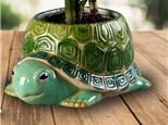 """ Turtle Planter"" To-Go Kit-at Color Me Mine - Aspen"