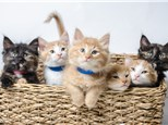 Purrfect Love Cat Night Feb 8th 4-6p