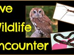 Wildlife Encounter Paint N Learn w Center for Aquatic Sciences - October 28th