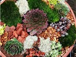 succulent garden workshop - august 2nd at 6:30pm