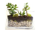 Succulent Terrariums - Cannot redeem Groupon