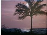 Jim's Kauai