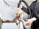Pet Day Care: For Pets Sake Mobile Grooming