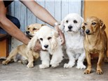 Pet Grooming: The Pawfessionals Dog Walkers & Pet Sitters