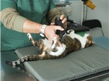 Pet Grooming: Jarchow, James L, Dvm - Orange Grove Animal Hospital