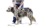 Pet Grooming: Morton Grove Animal Hospital