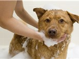 Pet Grooming: Paradise 4 Paws DFW