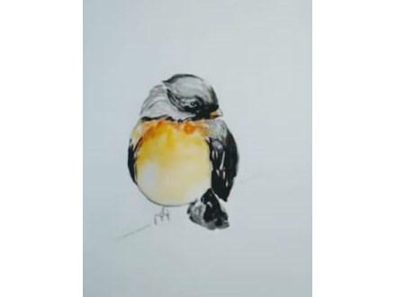 Robin Watercolor Tutorial Online