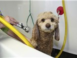Pet Grooming: Bowwow Fun Towne