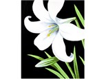 Canvas & Wine Night! Easter Lily! 3/30/18
