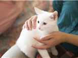 Pet Sitting: Wages, Page, Dvm - Care First Animal Hospitals
