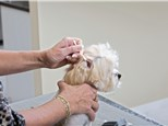 Pet Grooming: Valley Animal Hospital P.C.
