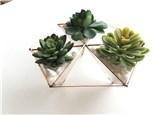 DIY Glass Terrarium