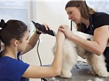 Pet Grooming: Dog Lodge