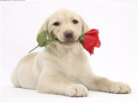 Puppy Love Day! Sunday Feb. 10th 11 AM - 2 PM